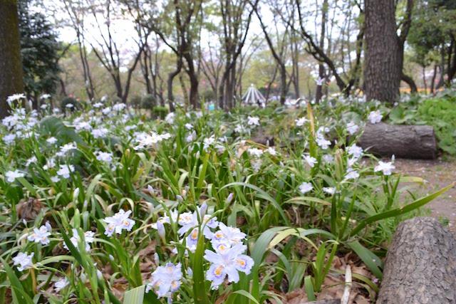 自然の林床に近い環境を目指して整備されている「名城公園ナチュラルガーデン」