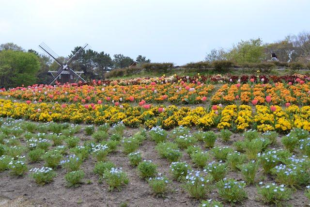 チューリップをはじめとするいろいろな花で彩られる名城公園の「花の山」