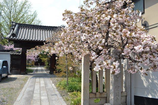 桜の花が美しい浄土宗寺院の高木山宝周寺