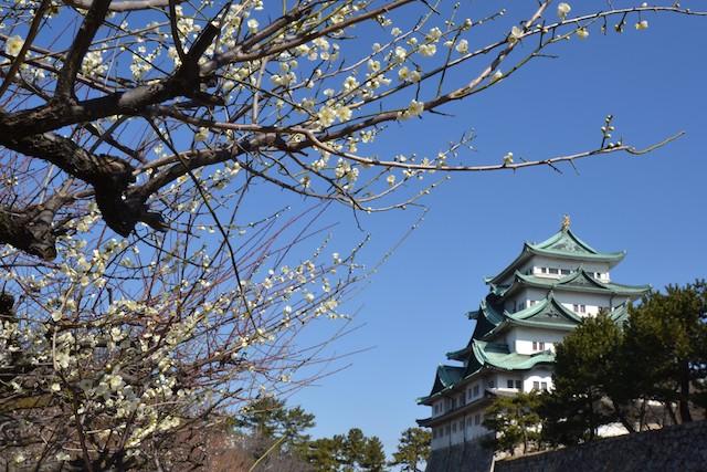 建て替えにより間もなく見納めとなる名古屋城「昭和の天守閣」