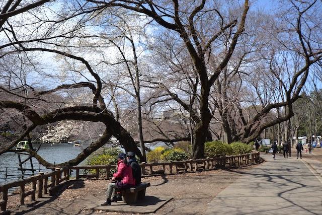 井の頭恩賜公園のベンチで佇む人たち
